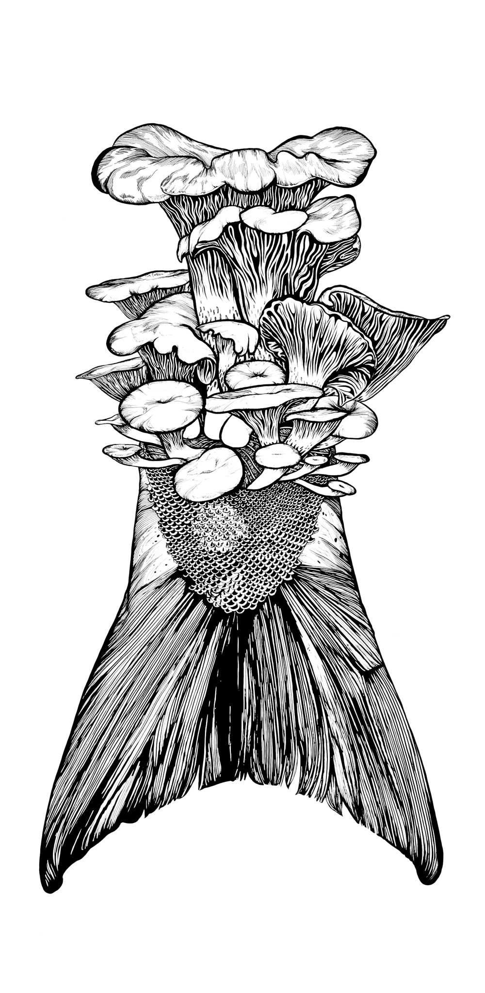 "Pacific Golden Chanterelle; pen and ink, 37 ½"" x 18 ¼"""