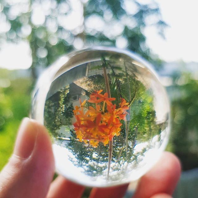 Who needs a fish eye lens when you could use a clear quartz crystal ball? #lensball #nature #flower #crusifixorchid