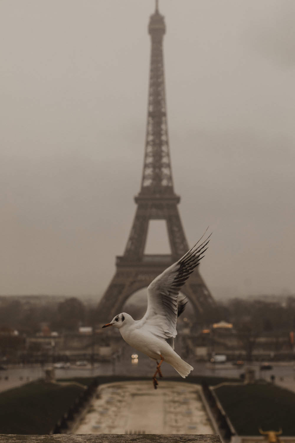 The view of the Tour Eiffel from Trocadero. (PS - you can  buy this  as a tapestry!)