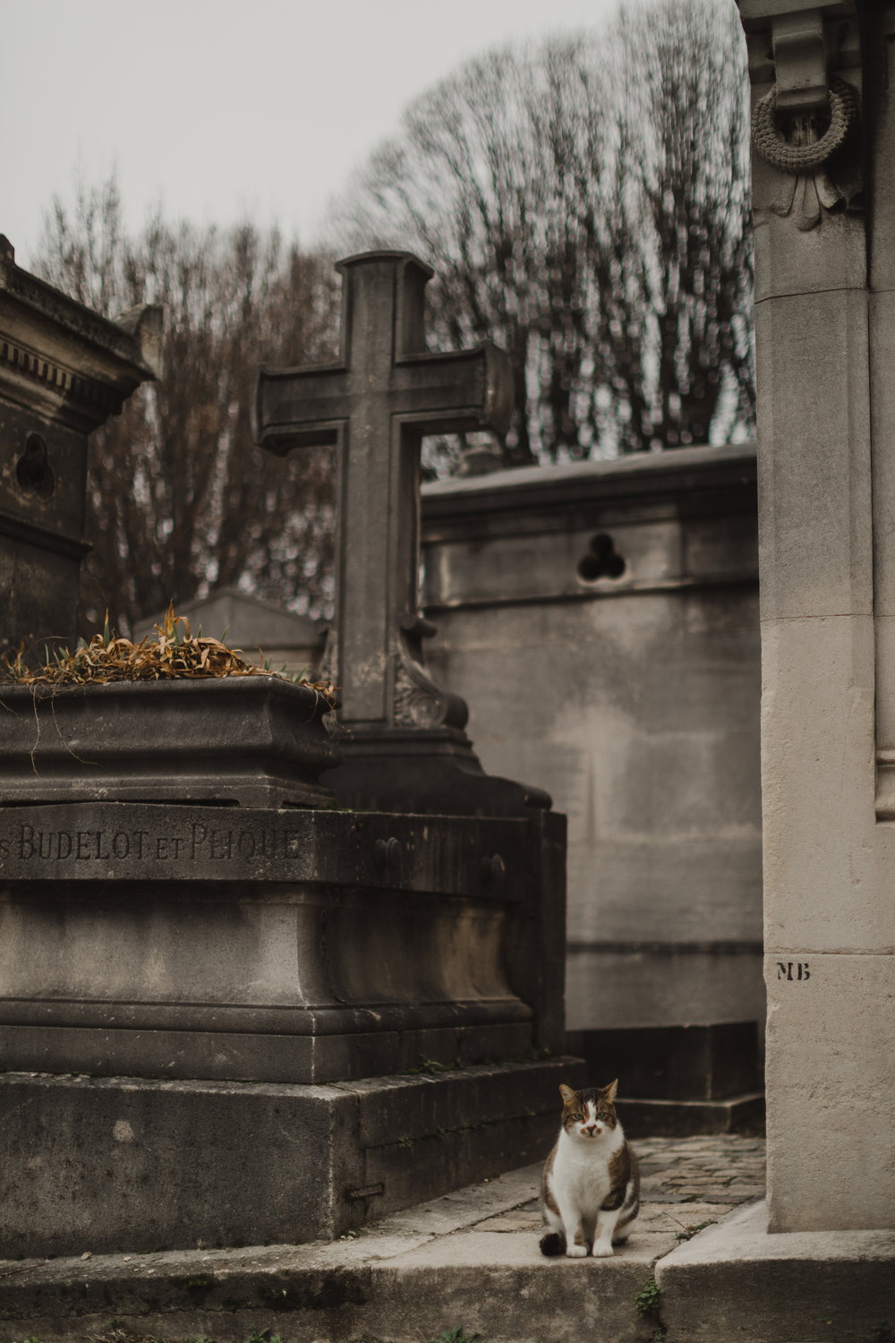 The sweetest cat hanging out in the cemetery Pere Lachaise