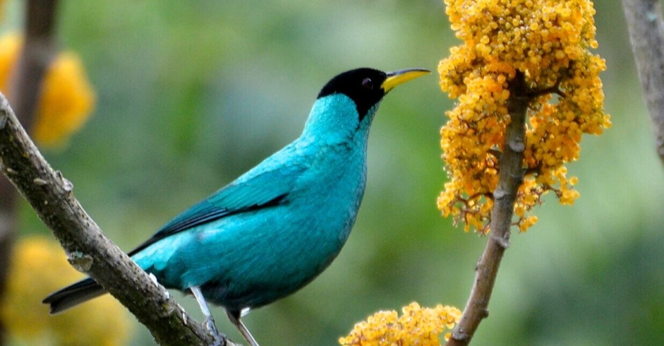 Tropical Bird Tour -