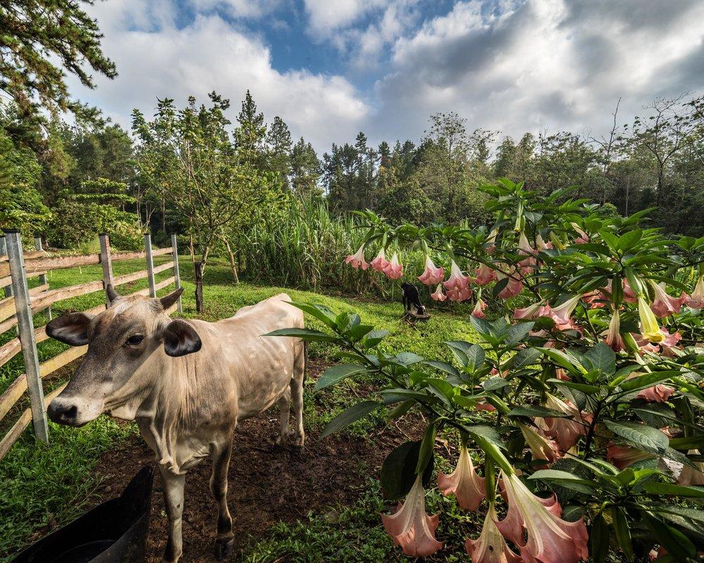 Biodynamic    Farm -