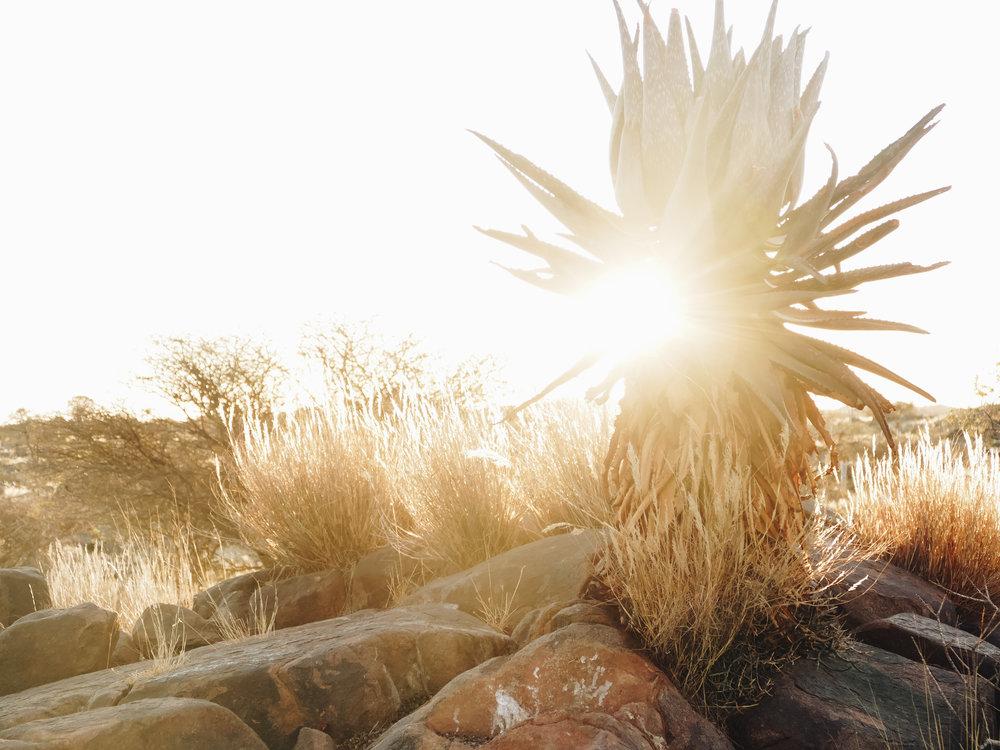 namibia-203-2.jpg