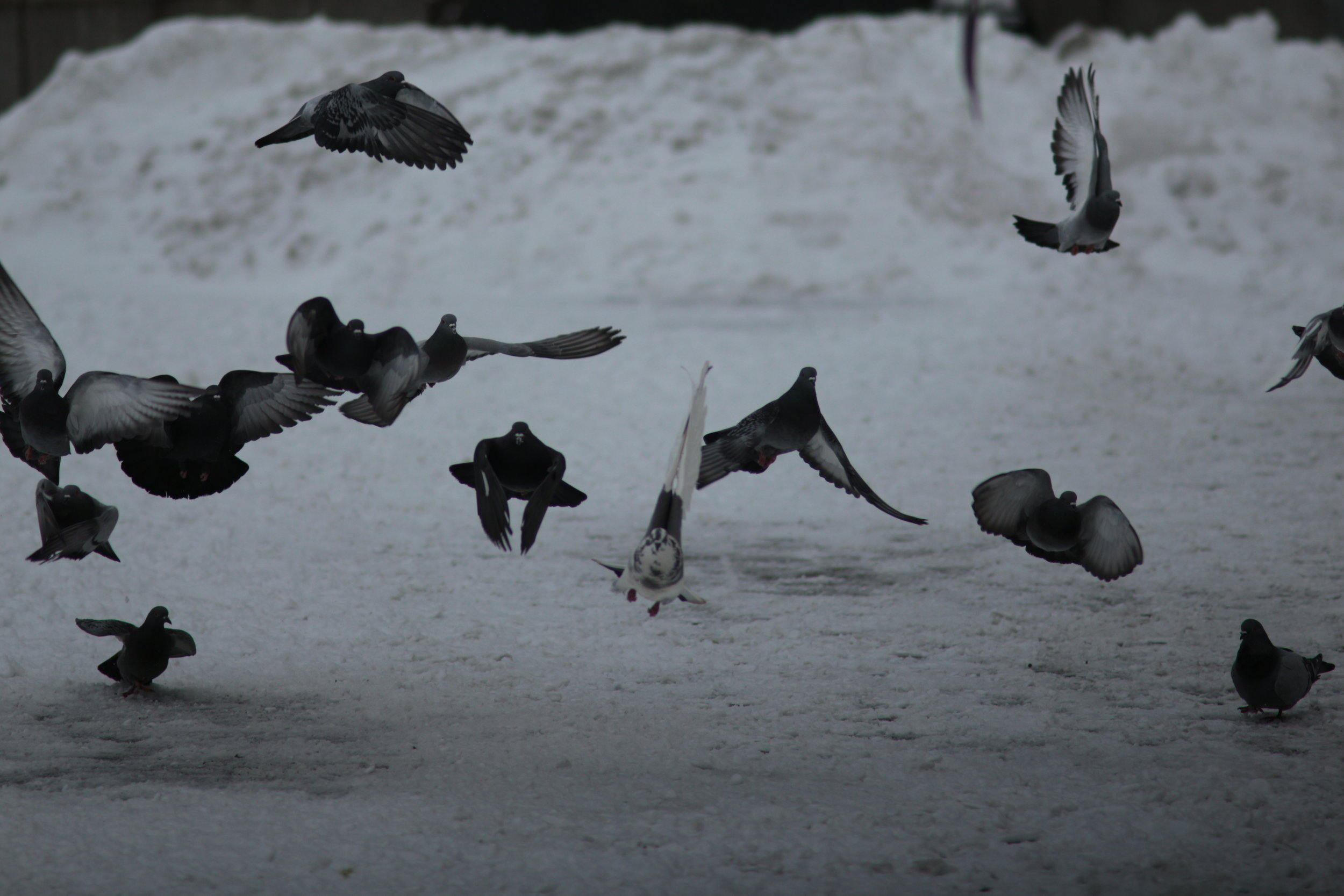 Pigeons Taking Flight at base of | Simon Bolivar Statue | Canon EOS M, Canon FD 135mm 2.8