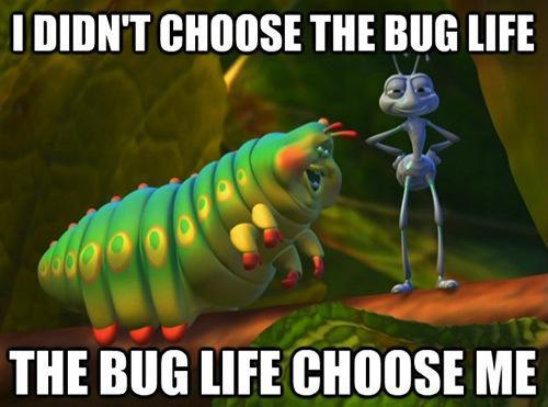 Macro Bug Life Meme Cameraplex