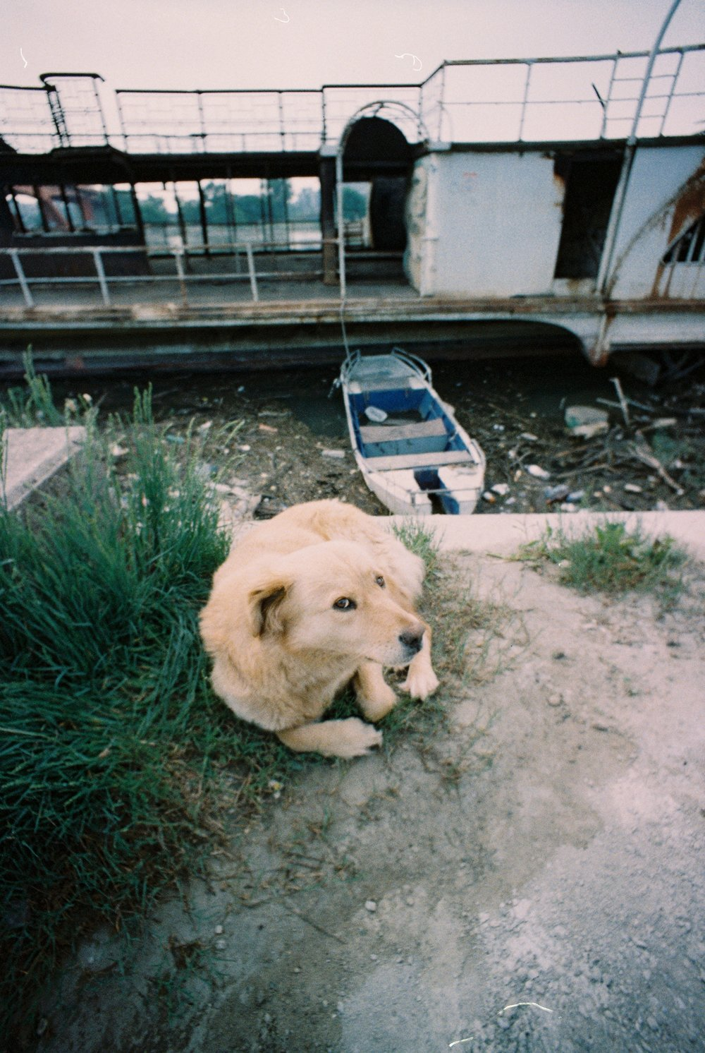 Stray Dog at Abandoned Boat - Summer, 2017