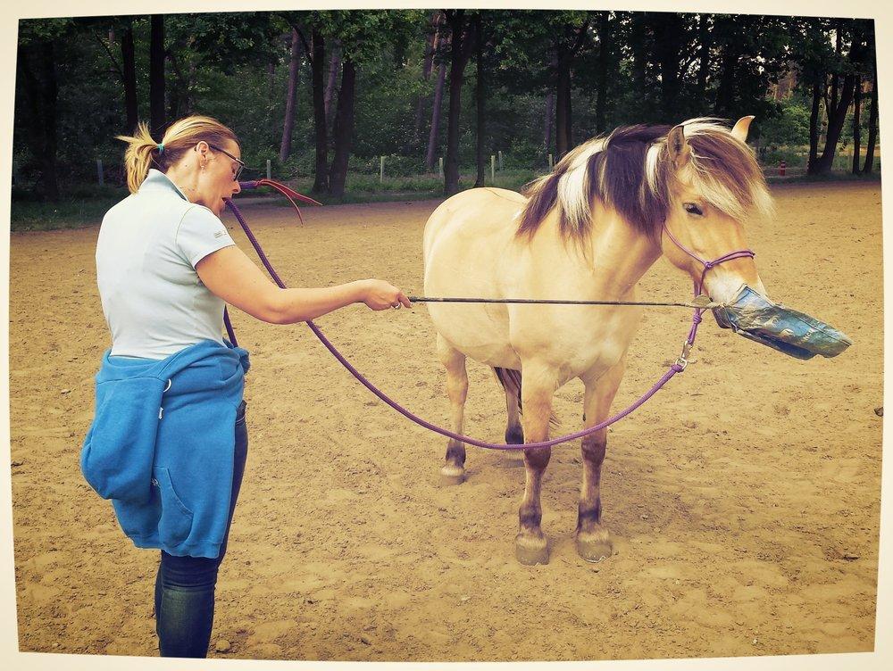 grondwerk natural horsemanship barbara hoekstra