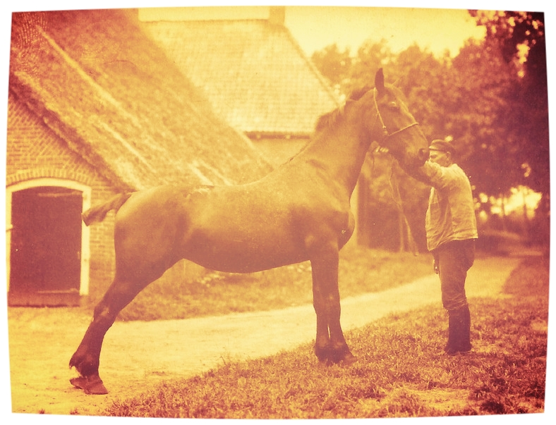 keuring_paarden.jpg