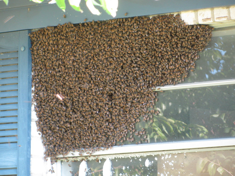 This is a swarm on a window!
