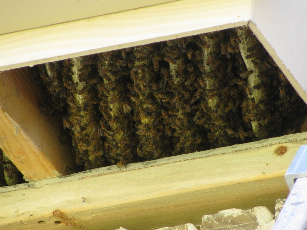 Honey comb inside of a soffit of a home.