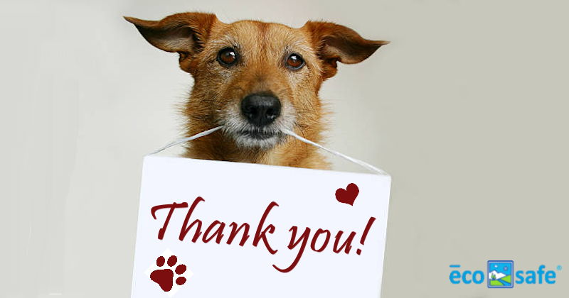 Thank you to our customers who helped us support the  Humane Society of Dallas County - Dog & Kitty City Shelter  with last month's promotion. We have also donated services to the  SPCA of Texas 's  Fur Ball 2017 .