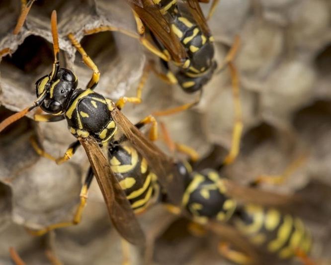 bees-2351041_1920.jpg