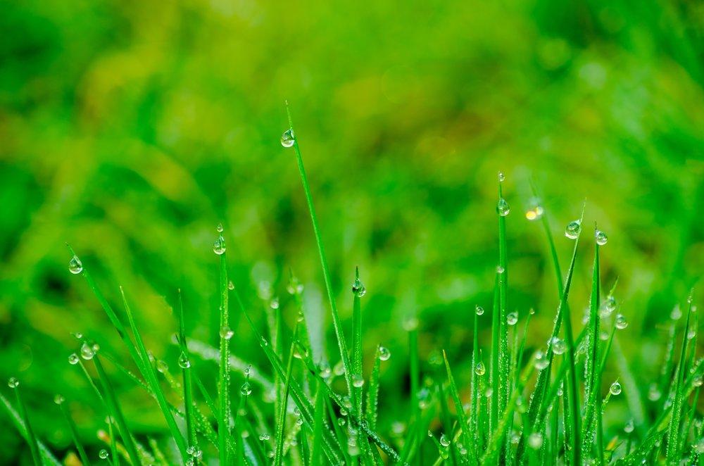 background-blade-blur-352096.jpg