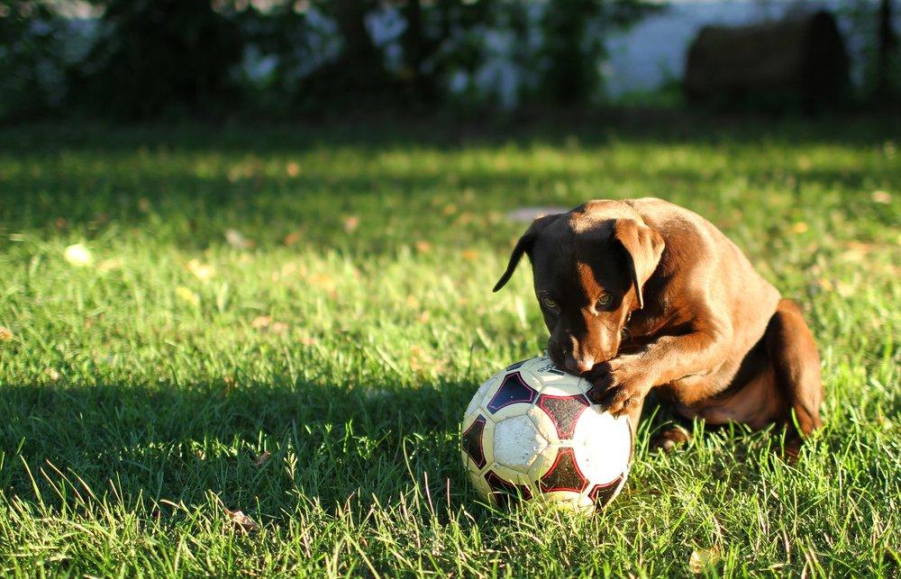 puppy-2022351_1920.jpg