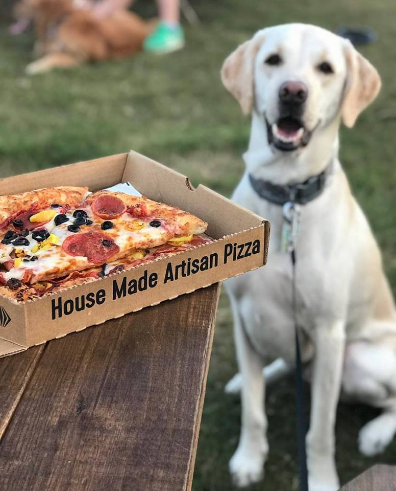 pizza dog.jpg
