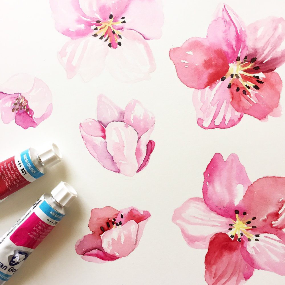 Watercolor Cherry Blossoms