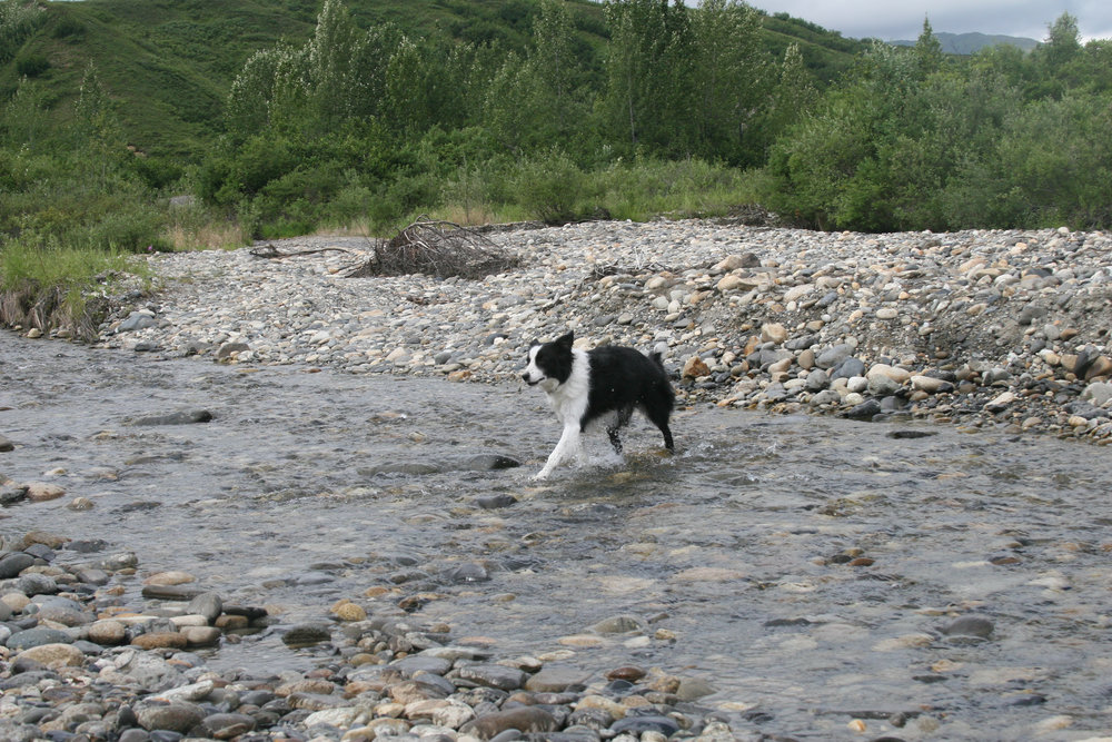 Jack playing in Peters Creek.jpg