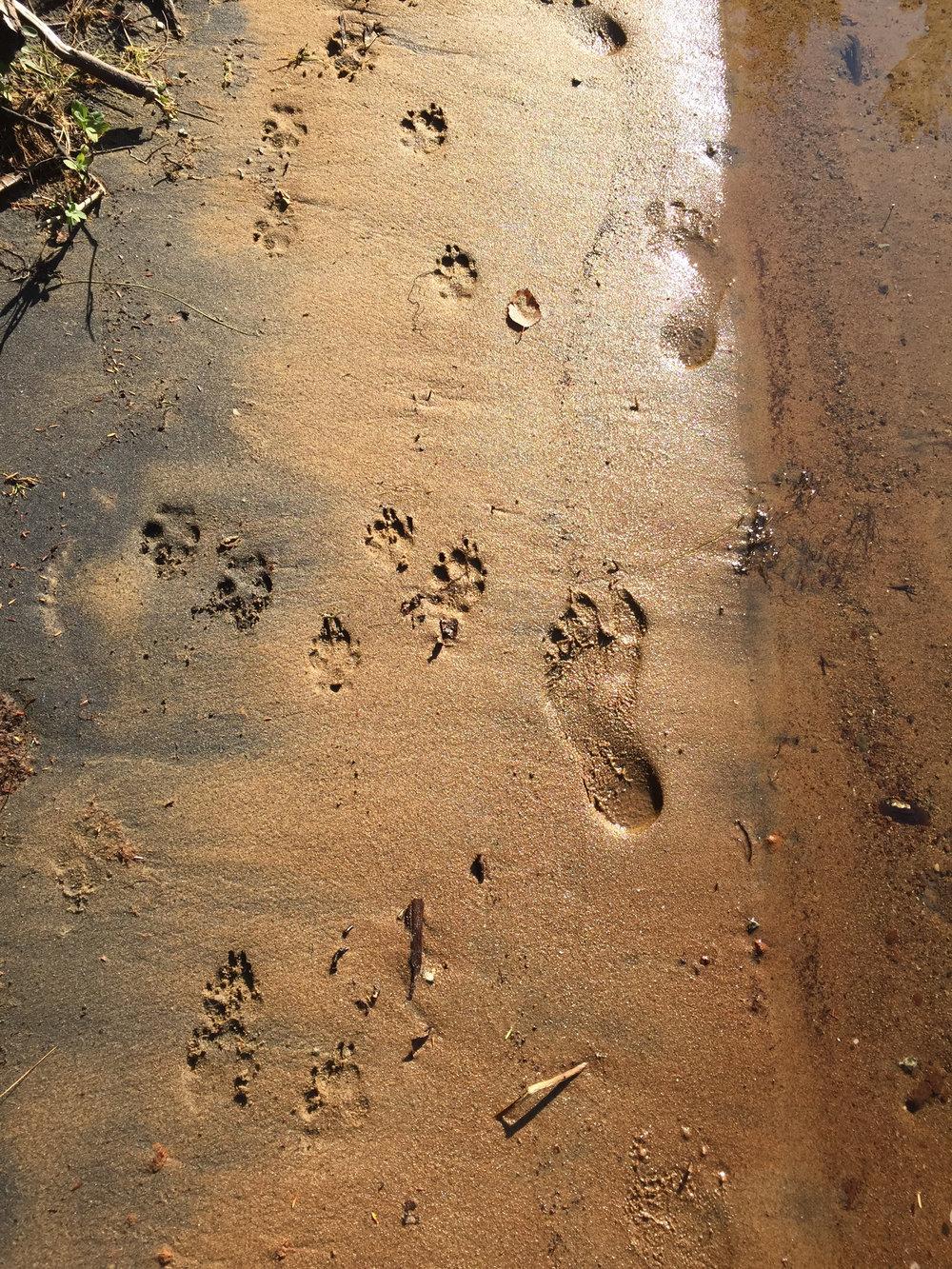 sand prints.jpg