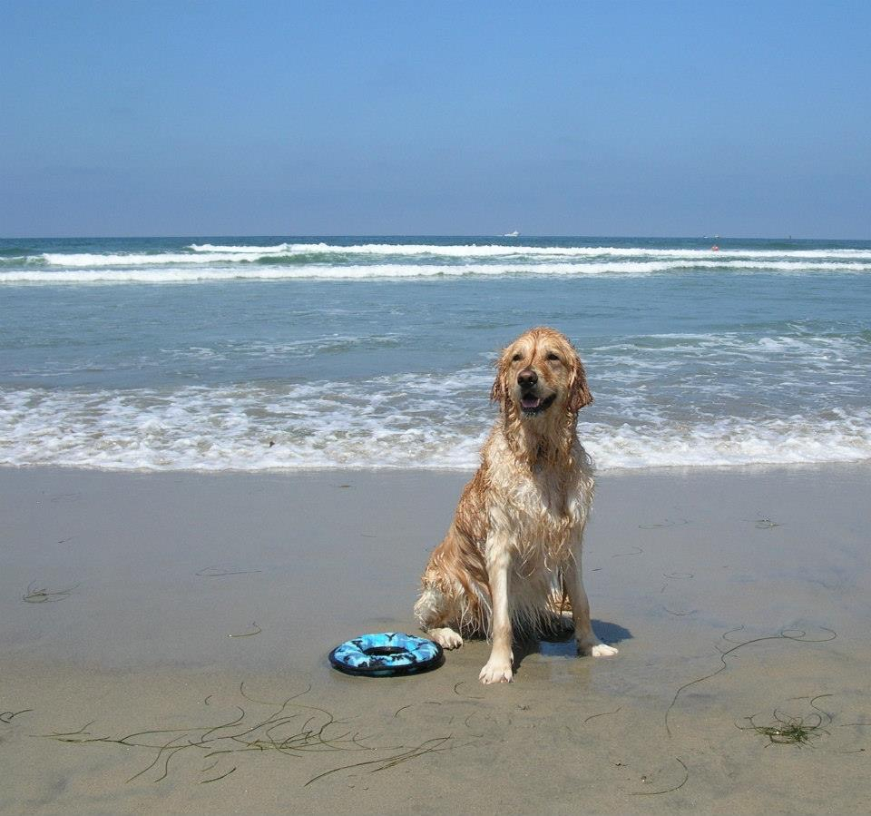 Tucker at dog beach.jpg