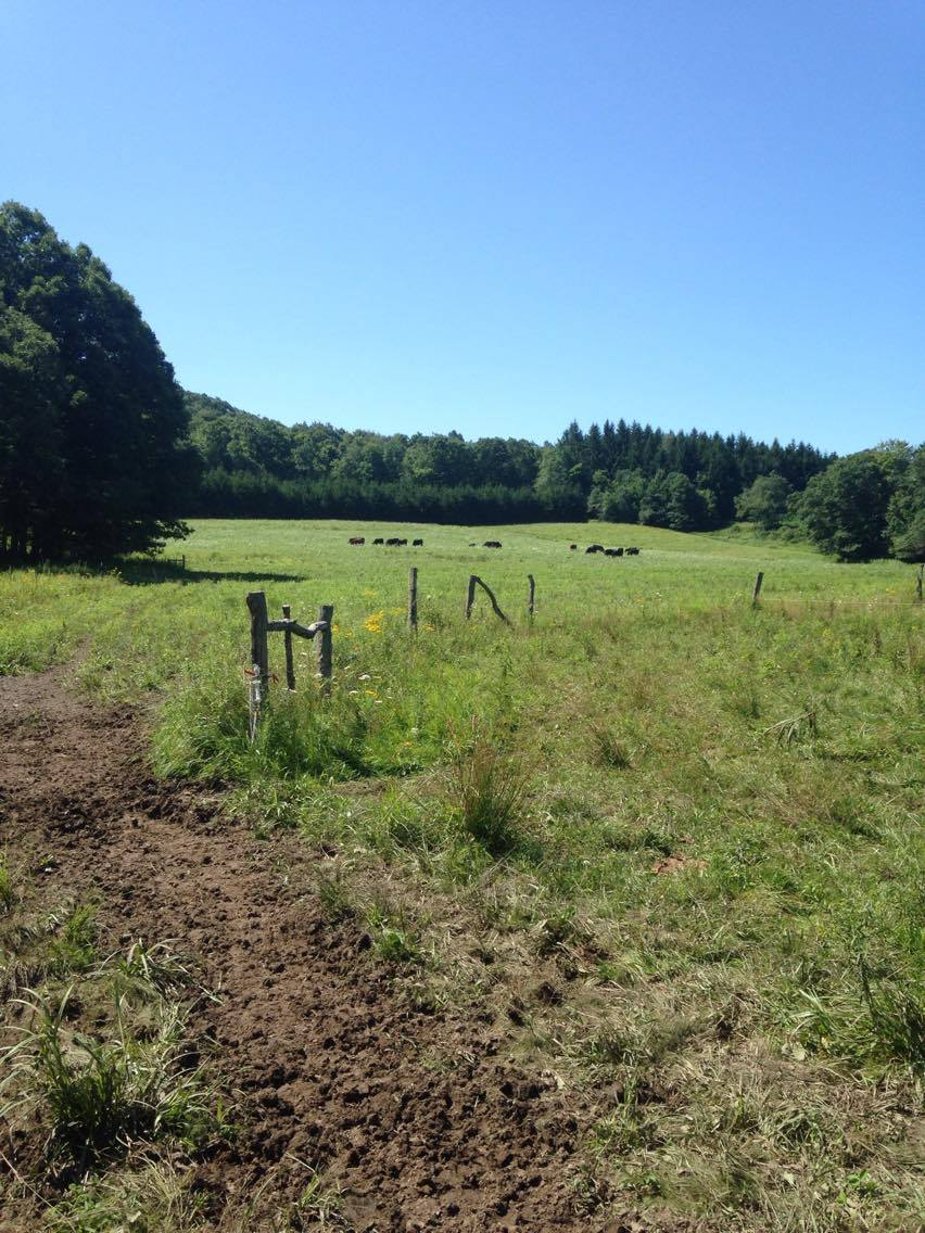 Possum Tail Farm focuses on improving and maintaining soil health; promoting natural organism diversity; minimizing soil erosion and nutrient leaching. They also minimize the use of external energy: fossil fuels, electricity, etc.