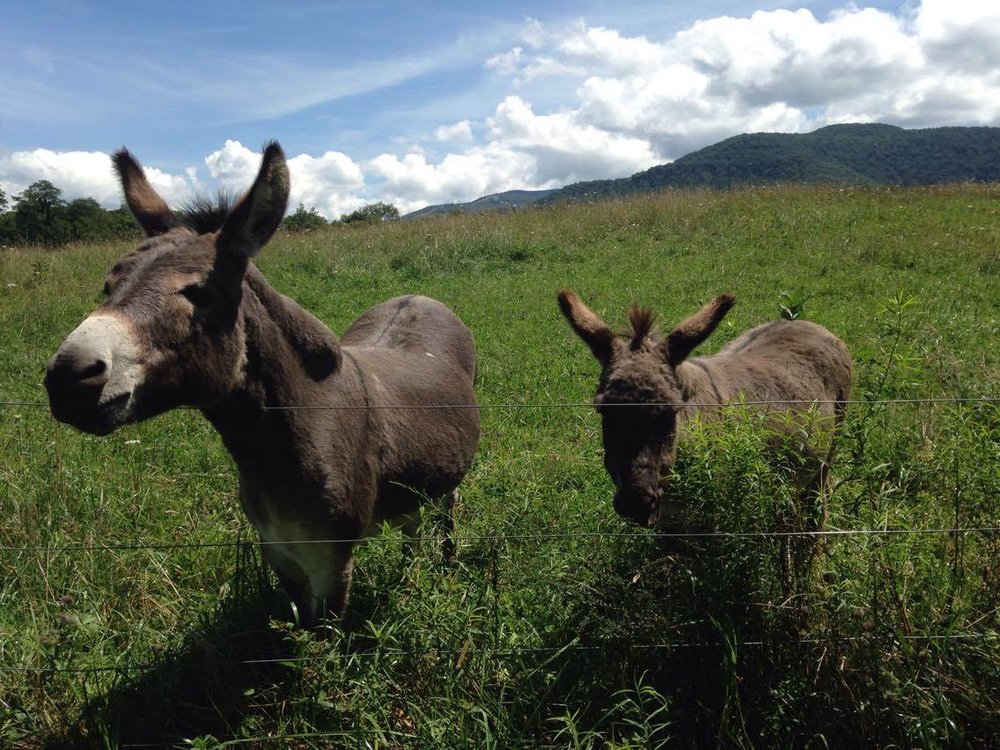 And of course to add to the magic of the place...pet donkeys! They love their apple treats!