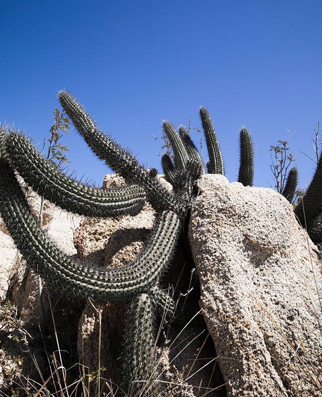 Cactus--great for photos, bad for hikes 😖🌵 . . . .  #cacti #plants #nature #cactuslove #cactusclub #succulentsofinstagram #botanical #urbanjungle #natural #plantsofinstagram #hiking #adventure #explore #outdoors #travel #mountains #wanderlust #wilderness #instagood