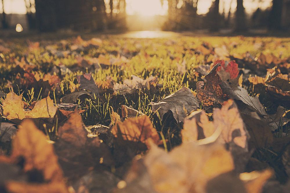 Fall Autumn Leaves Home Ready Checklist