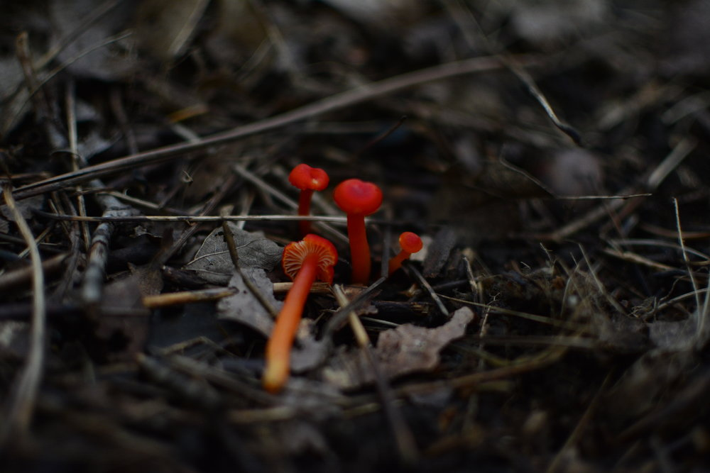Younger, more red-orange individuals.