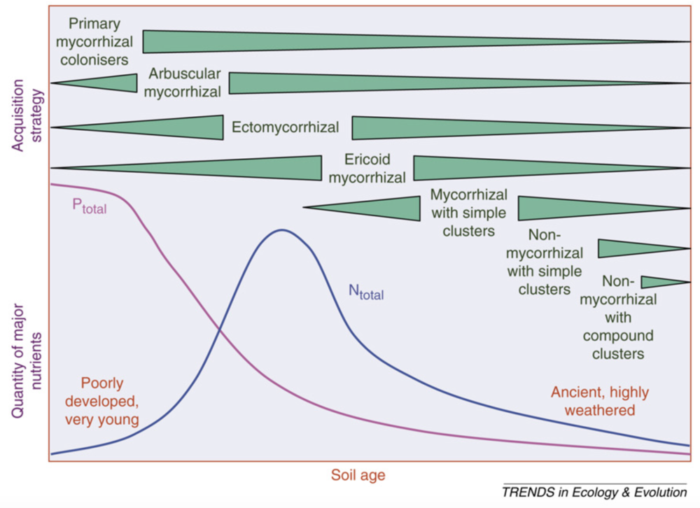 Soil nutrients and nutrient strategy as a function of soil age.  Lambers et al. 2008 .