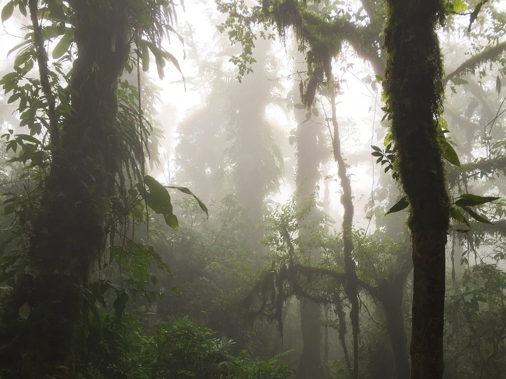 Picture I took while hiking in a Costa Rican cloud forest.
