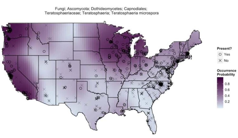 Teratosphaeria microspora  distribution. Grantham et al. 2015 .