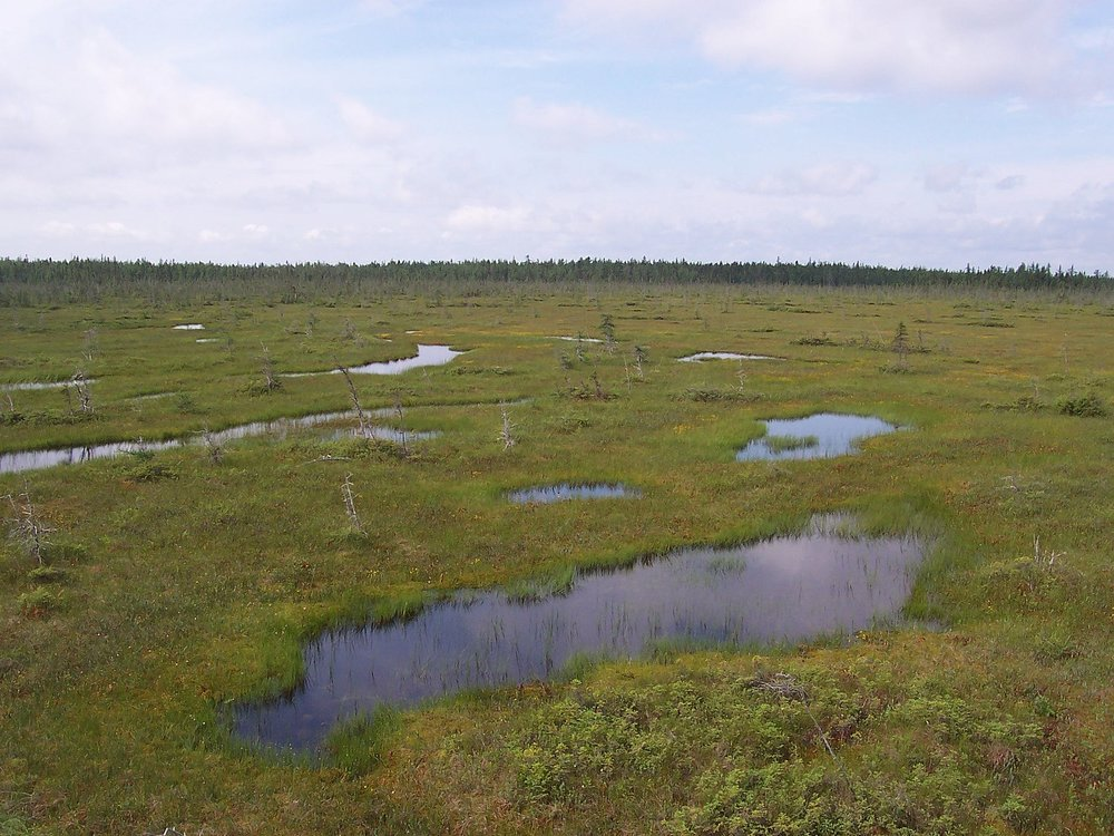 Sphagnum bog in  Frontenac National Park  ,   Quebec  ,   Canada  .