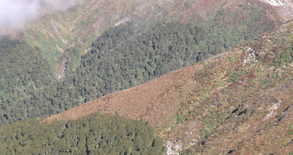 The limitations of tree distribution in alpine environments; the tree line.