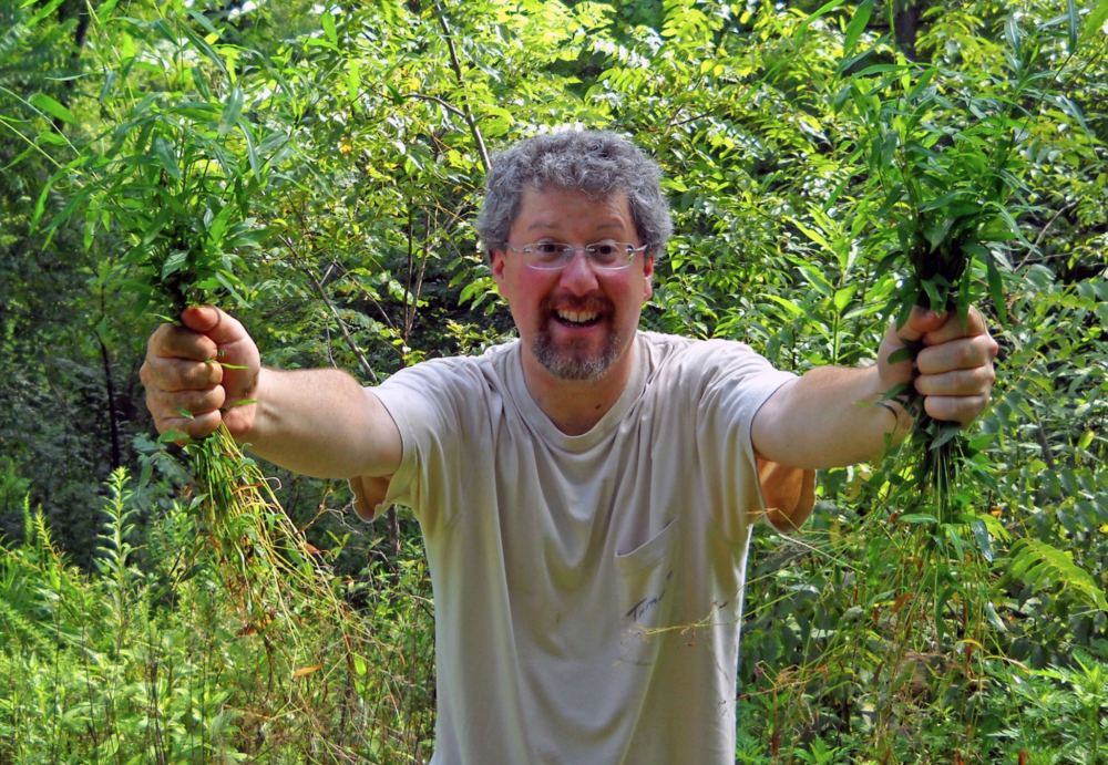 Ecologist Dr. Robert Warren in the field, removing an invasive grass.