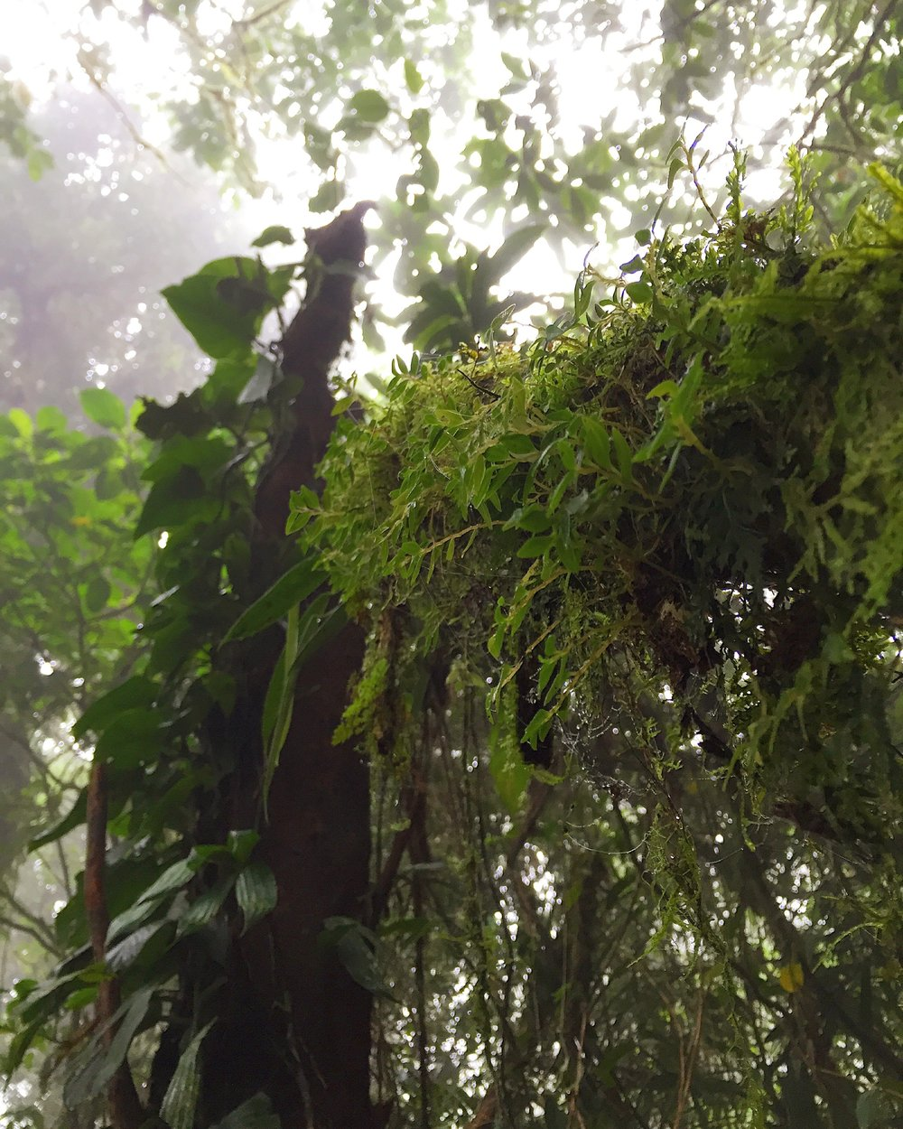 Plant diversity drives soil feedbacks. Check out the epiphyte diversity in Central America.