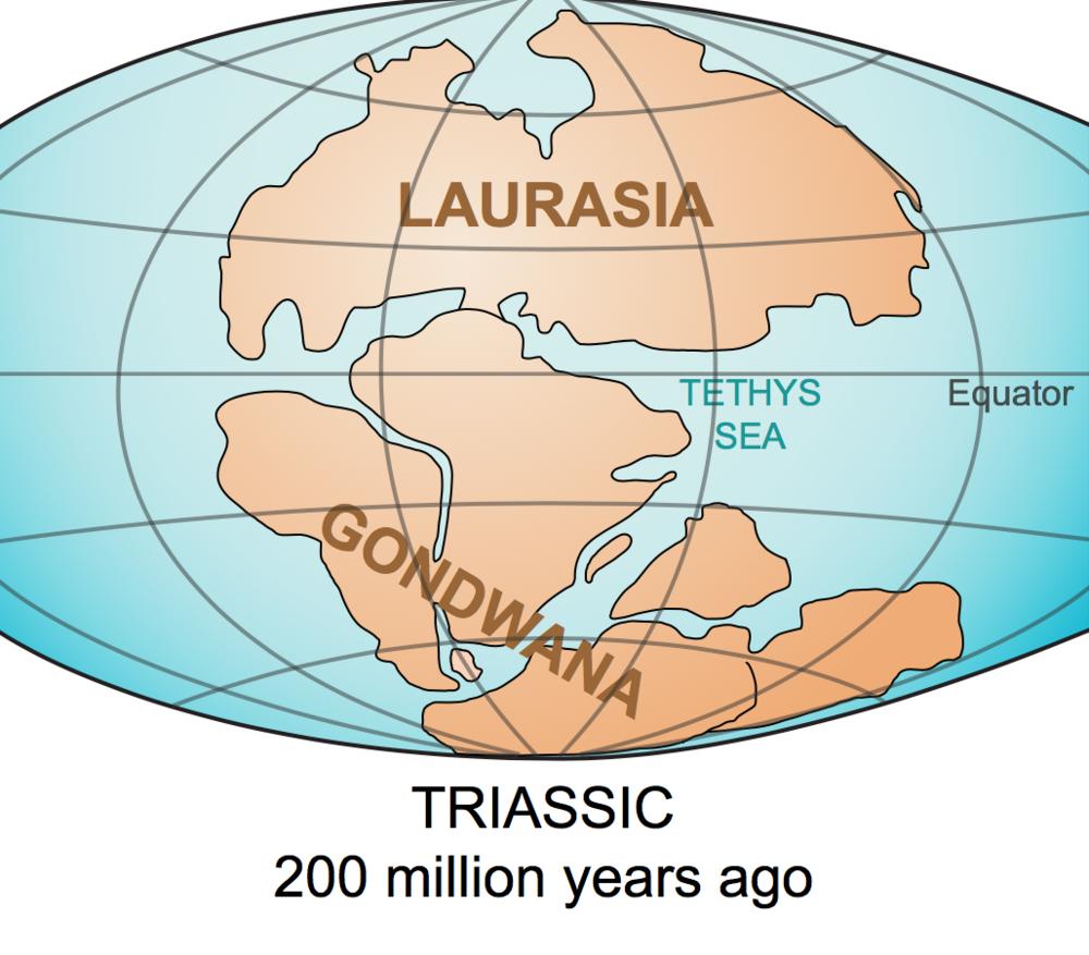 Supercontinent  Gondwana .