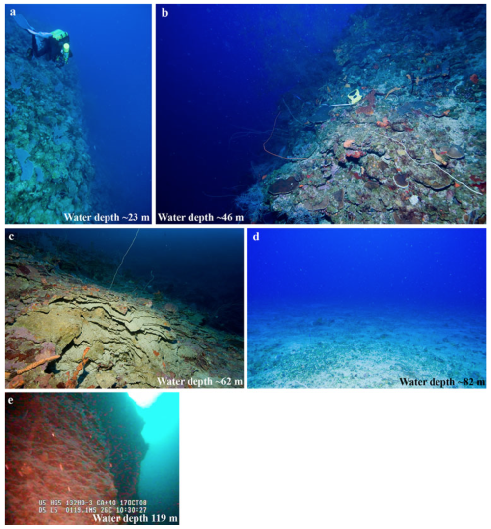 Different species dominate different depths of mesophotic coral ecosystems.  Sherman et al. 2010 .