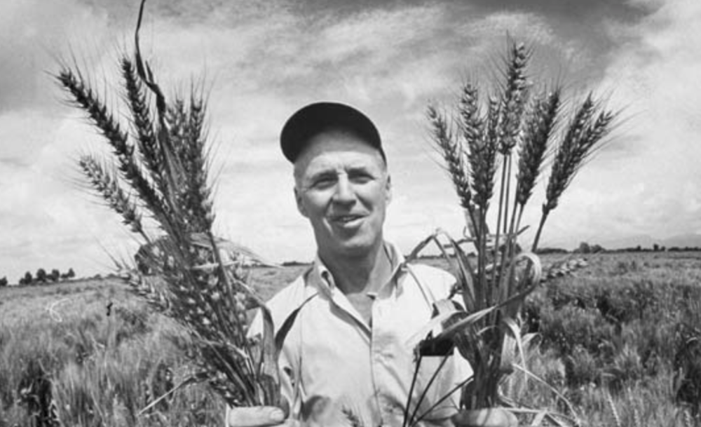 Norman Borlaug; rust's worst nightmare