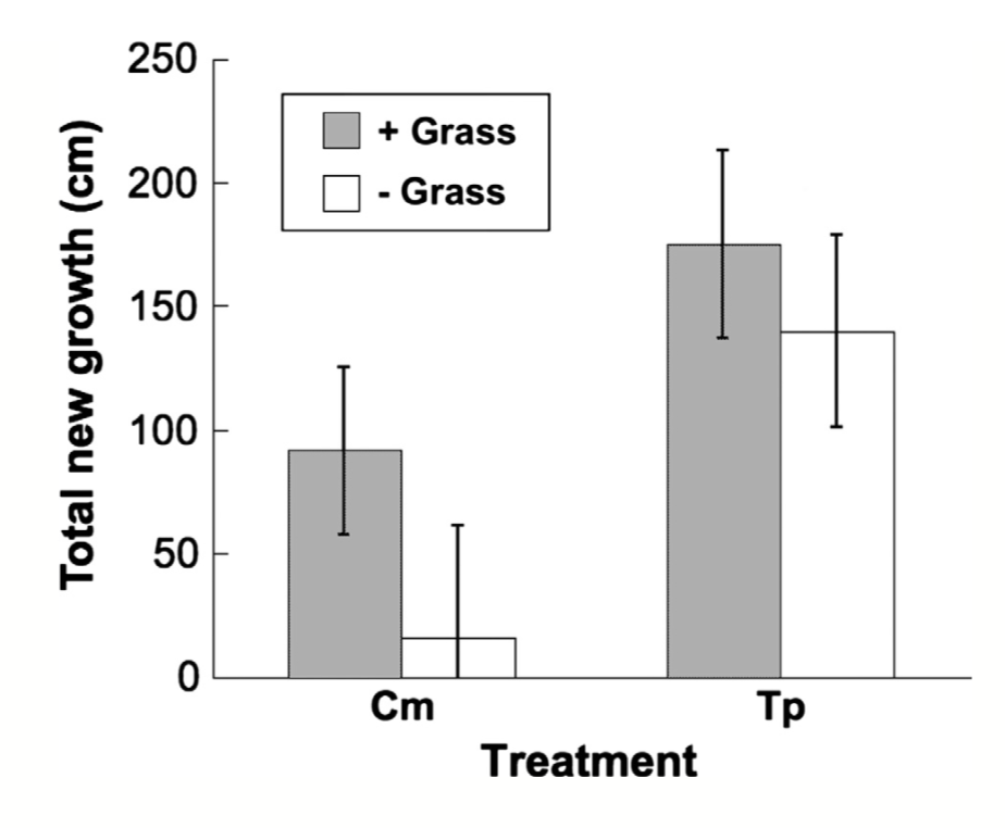 Seedling growth of  Acacia  trees inhabited by both species of ant. In the presence of grass, Acacia seedlings grew more, but these results were not statistically significant.  Palmer et al. 2017 .