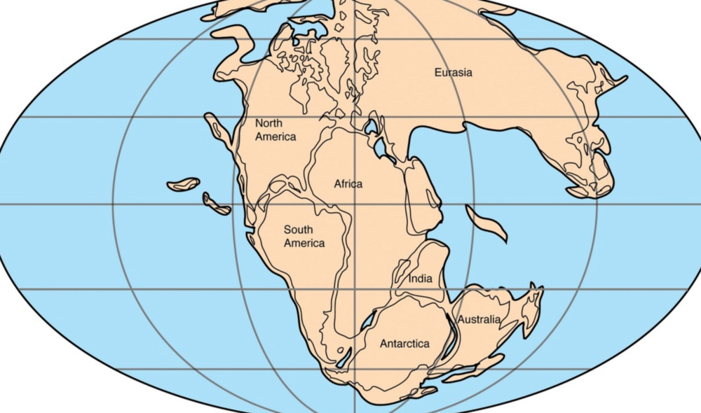 Gondwana once connected South America to Australia. Species originating from this time period can be found in these distant regions today.