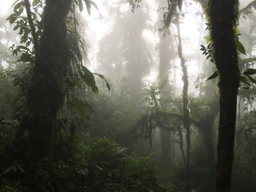 My favorite shot I took of a Costa Rican rainforest.