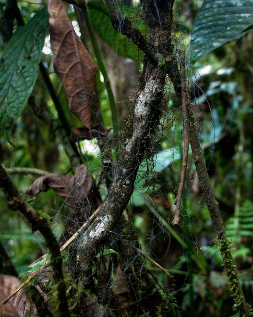 Net-like rhizomorphs decomposing fallen plant debris. Photo by  Danny Newman .