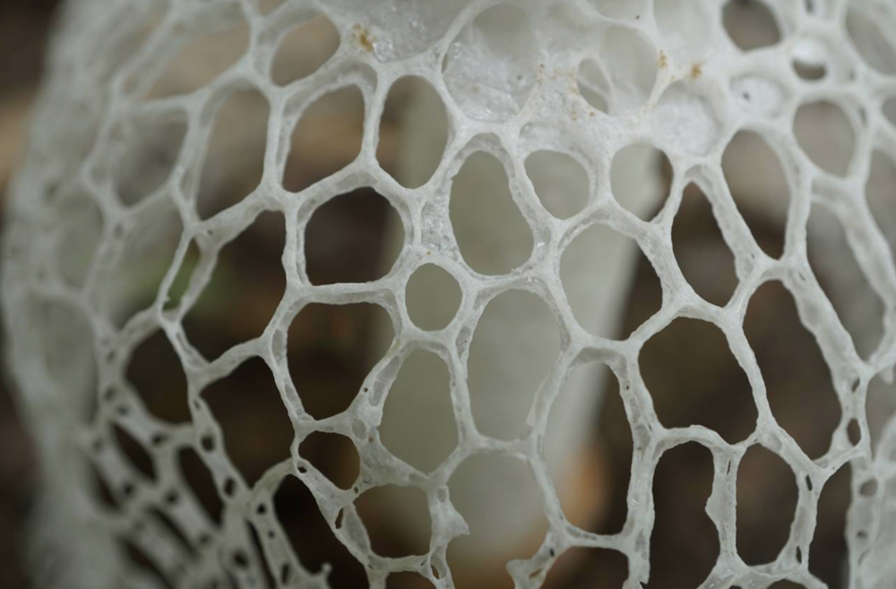 The net-like veil up close. Photo by  Alison Harrington .