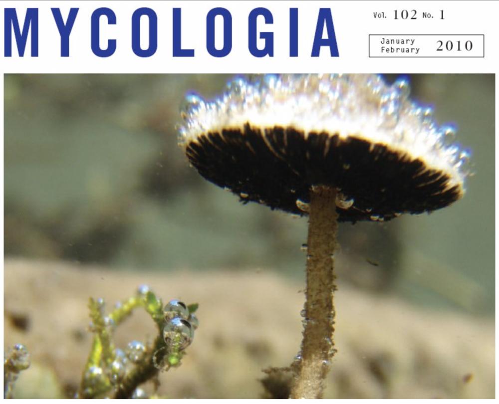 The aquatic gilled mushroom;  Psathyrella aquatica .