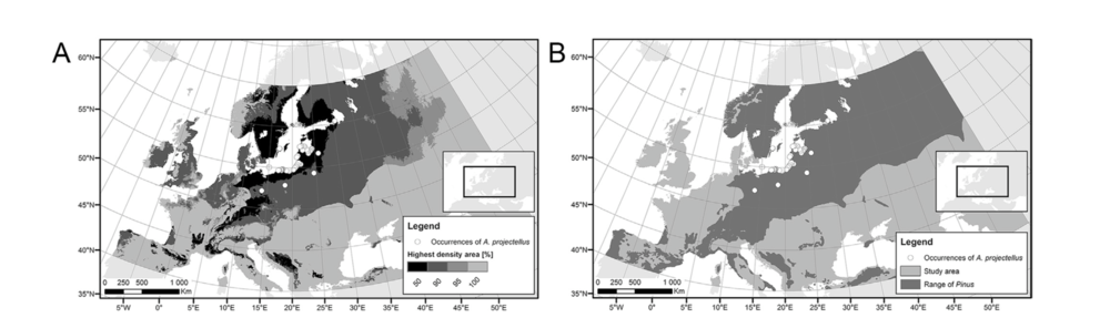 A.) White circles depict  Aureoboletus projectellus  occurrence. Darker regions show higher probability of invasion. B.) Dark region shows pine distribution.  Banasiak et al. 2019 .