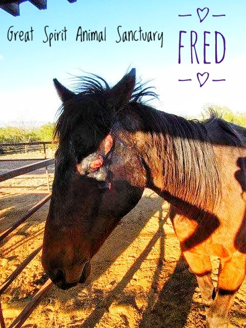Fred our wonder horse.