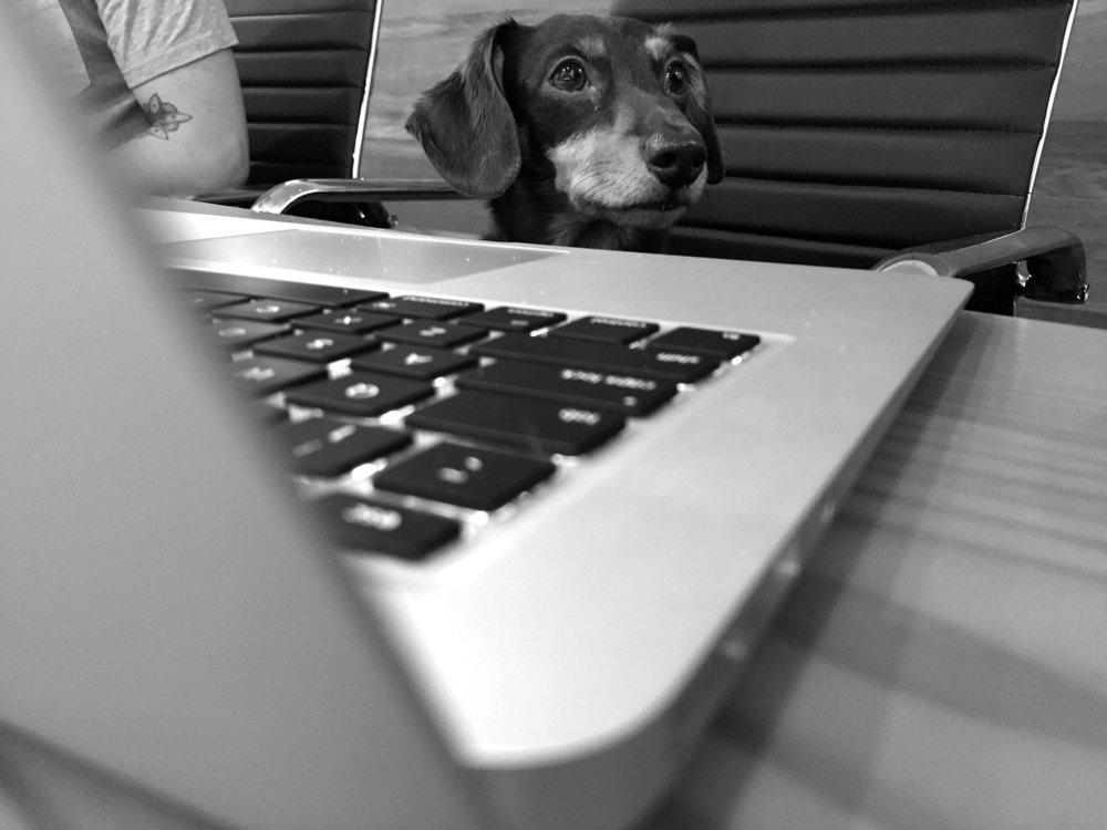 Watson At A Computer