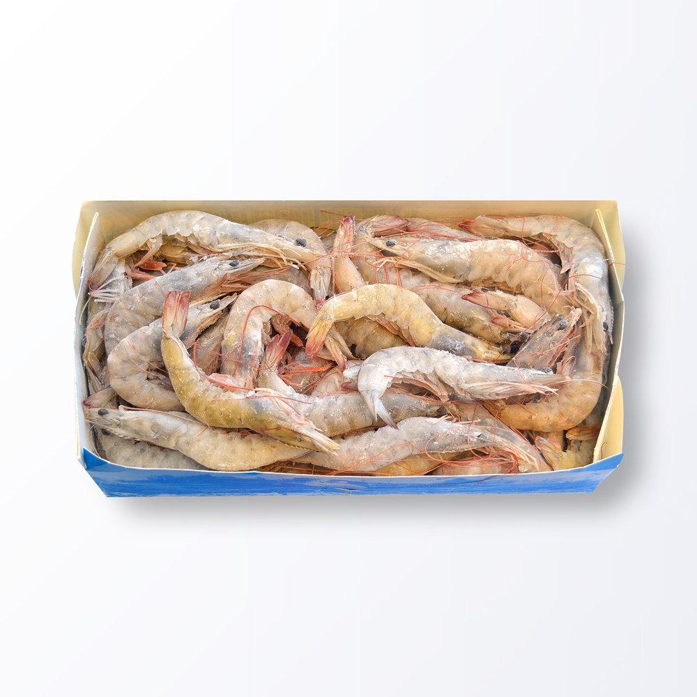 SHR567-Shrimp-Vannamei-Head-On-Shell-On.jpg