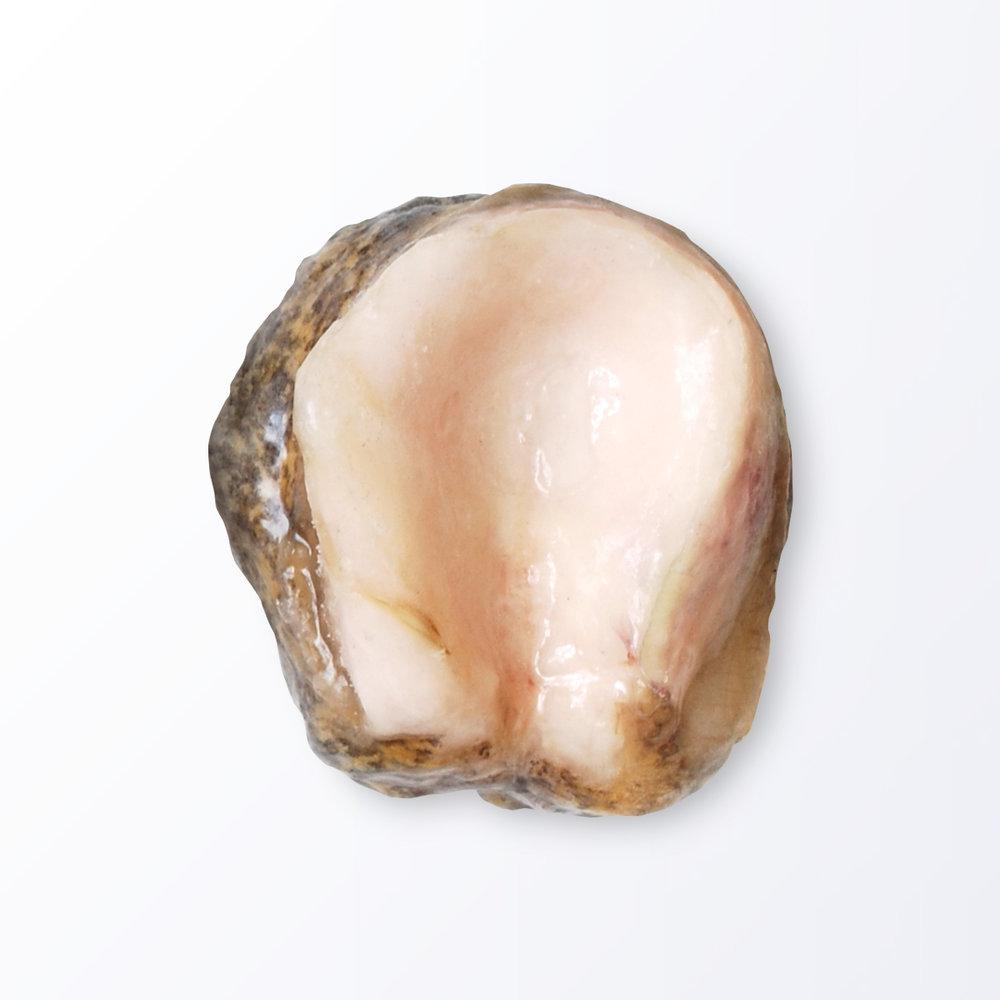 ABA117-Abalone-Style-Shellfish.jpg