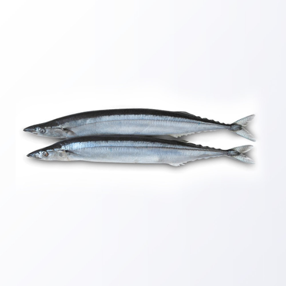 MAC173-Mackerel-Pike.jpg